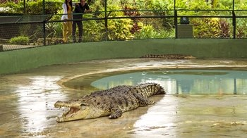 Private Crocodile Farm & Underwater World