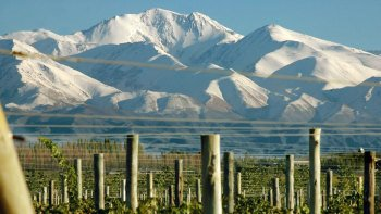 Mendoza Vineyards Tour with Wine Tasting