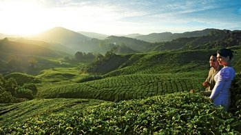 Private 2-Day Cameron Highlands Experience