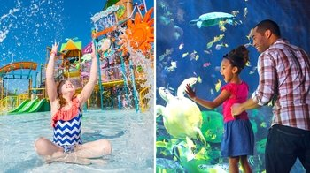 SeaWorld Florida Tickets - Choose Your Adventure