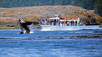 Private Whale Watching Charter from Friday Harbour