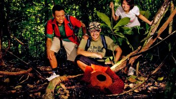Private Rafflesia Safari with Lunch
