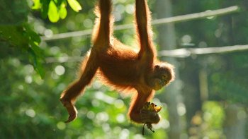 Full-Day Sandakan Tour & Orangutan Sanctuary with Lunch