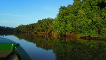 Afternoon River Cruise to Kinabatangan