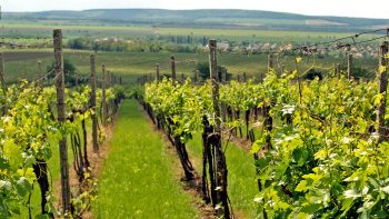 1-Way Small-Group Budapest to Bratislava Tour with Wine Tasting
