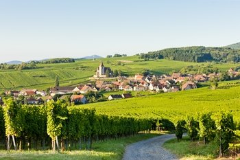 Alsace Full Day Wine Tour from Strasbourg