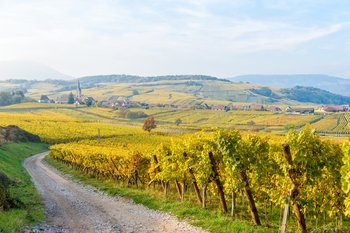 Alsace Half-Day Wine Tour from Strasbourg