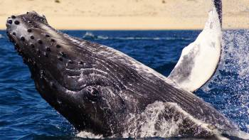 Small-Group Whale Watching Tour with Hydrophone