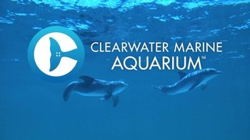 Clearwater Beach & Clearwater Marine Aquarium with Transport