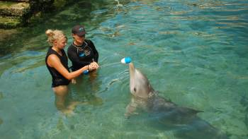 Dolphin Trainer for a Day Experience