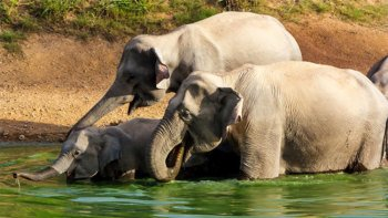 Private Half-Day Elephant Watching Tour at Kui Buri National Park