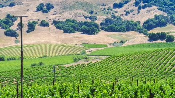 Enjoy a Morning in Wine Country—Sonoma Valley Half-Day Wine