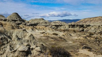 Petrified Forest Tour with Lunch