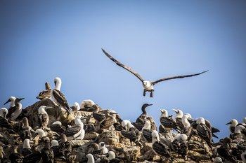 Ballestas Islands Half-Day Tour