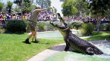 Admission to Australian Reptile Park