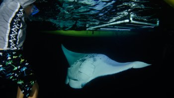Manta Ray Night Excursion in Outrigger Canoe