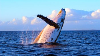 Maui Whale Watching Tour from Lahaina at Sunrise