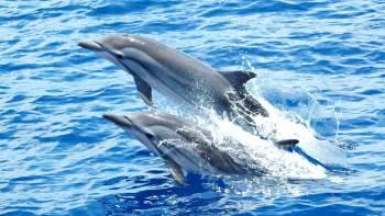 Dolphin-Watching Cruise in Cascais