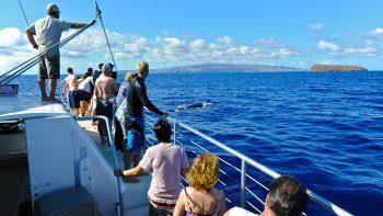 Midday Whale Watching from Makena Beach