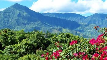 Best of North-east Kauai Sightseeing Tour & Riverboat Ride