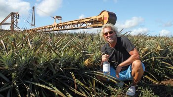 Guided Pineapple Plantation & Distillery Tour