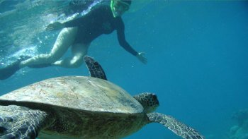 Snorkeling & Sightseeing Boat Tour