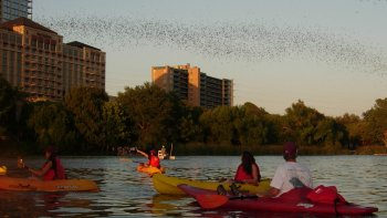 Kayaking Tour of Congress Avenue Bridge with Bats