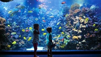 Maui Ocean Center Aquarium Admission