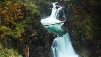 Waterfalls, Coombs Market, & Cathedral Grove Rainforest Private Tour