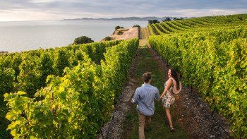 Half-Day Marlborough Winery Tour