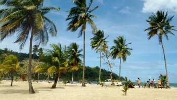 Full-Day City Tour, Maracas Bay & Caroni Bird Sanctuary
