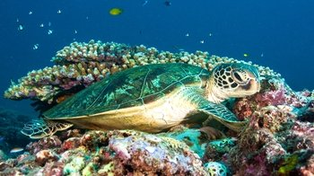 Full-Day Certified Dive at Ningaloo Reef with Lunch