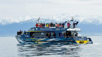 Kaikoura Whale-Watching Tour