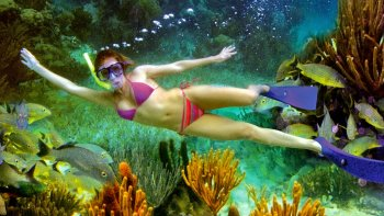 Puerto Morelos Reef Snorkelling Tour with Lunch
