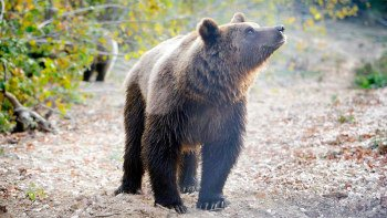 Libearty Bear Sanctuary Guided Tour