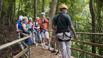 Tranopy Rainforest Sightseeing Tour
