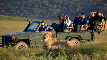 2-Day South African Wildlife Tour & Game Drive Safari