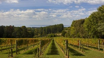 Small-Group Yarra Valley Food, Wine & Wildlife Tour