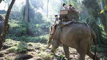 Half-Day Jungle Safari with Elephant Trekking & Performance