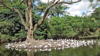 Flamingo Gardens Tour with Tram Tour & Wildlife Show
