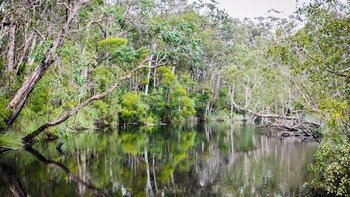 Half-Day Noosa River & Everglades Cruise with Barbecue Lunch