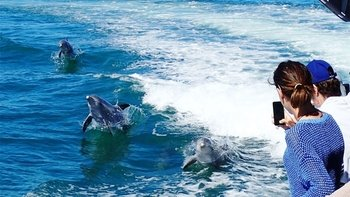 Dolphins, Penguins & Sea Lions Cruise