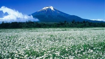 Private Guided Tour of Mt. Fuji Region by Car