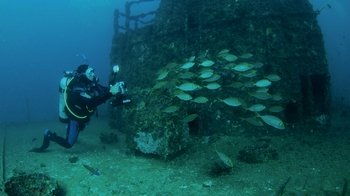 Double Dive at HMAS Brisbane Shipwreck