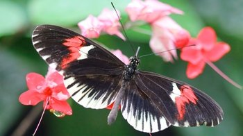 Butterfly Farm & Dual Nation Tour