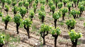 Languedoc Region Private Wine Tasting