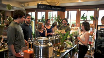 Small Group Willamette Valley Wine & Waterfalls Tour
