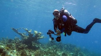 Certified Scuba-Diving or Snorkeling Adventure