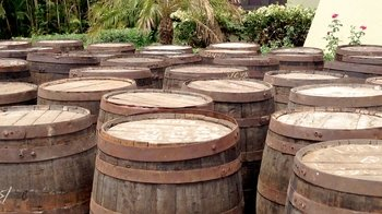 Full-Day Flor de Caña Rum Distillery Tour with Tasting