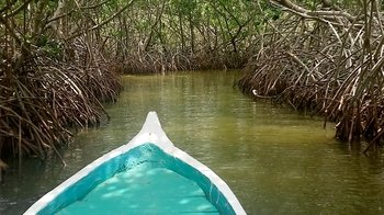 Private La Boquilla Mangroves Tour with Canoe Ride